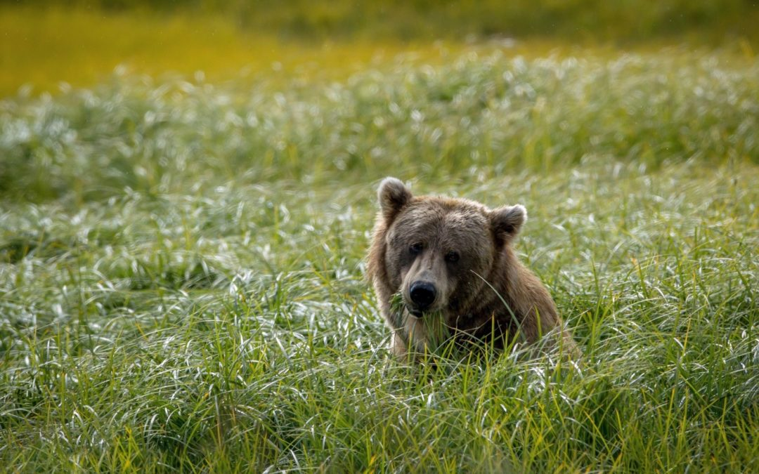 Interview with Robert J. Clark – BEARHUNTING,AGAIN